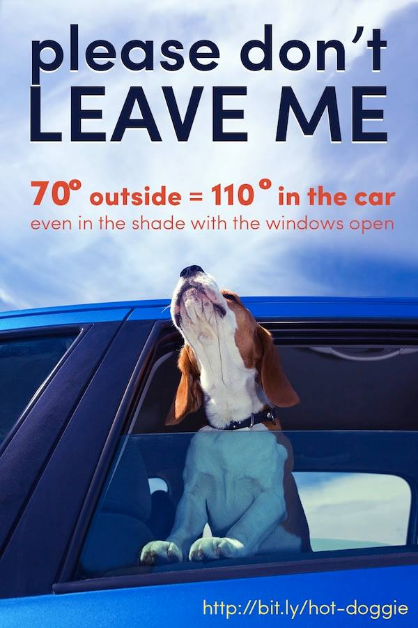 Don't leave pets in the car!