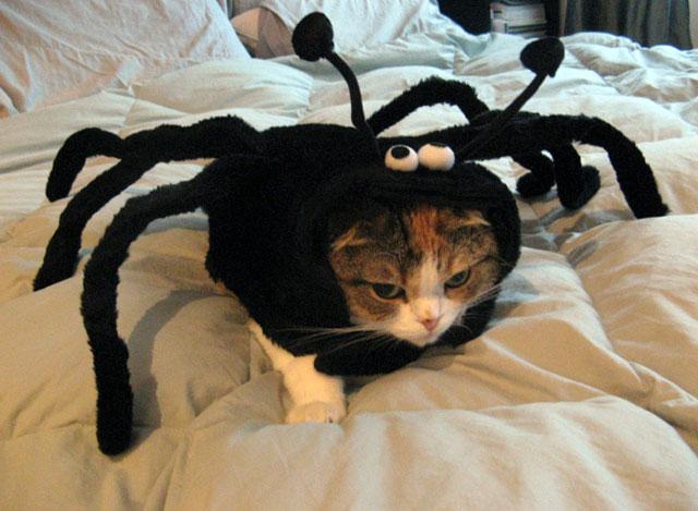 Stressful Halloween Costume