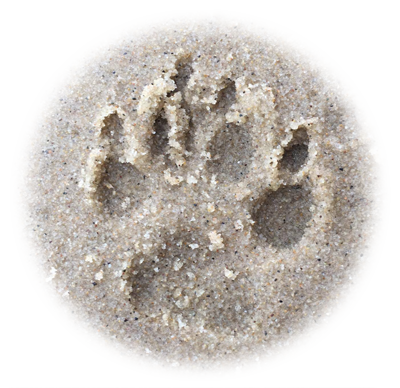 Paw print in the sand