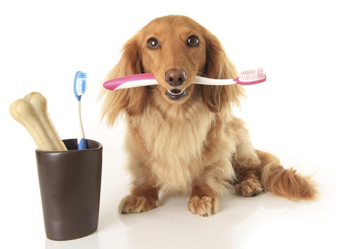 Dog holding tooth brush
