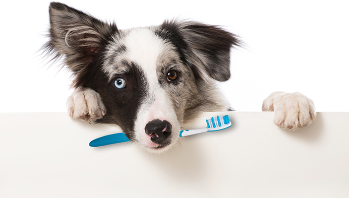 Dog holding tooth brush